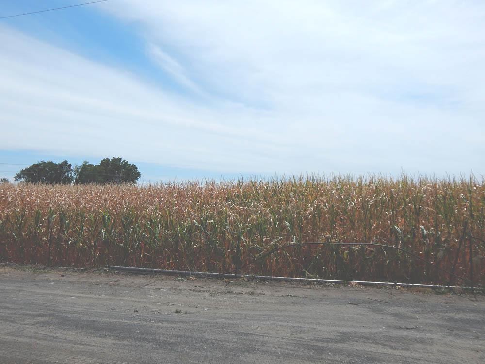 Hagerman, ID Corn Field | DitchingNormal
