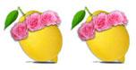 2 Lemons Rating
